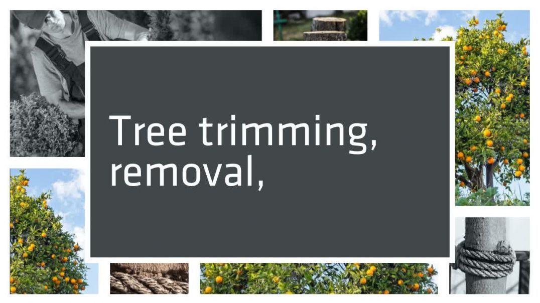 Premier_Tree_Surgeons_Cincinnati__Tree_Trimming__Tree_Service_Near_Me_720p.mp4